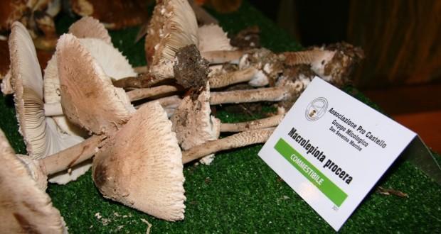 Funghi commestibili esposti nella passata edizione