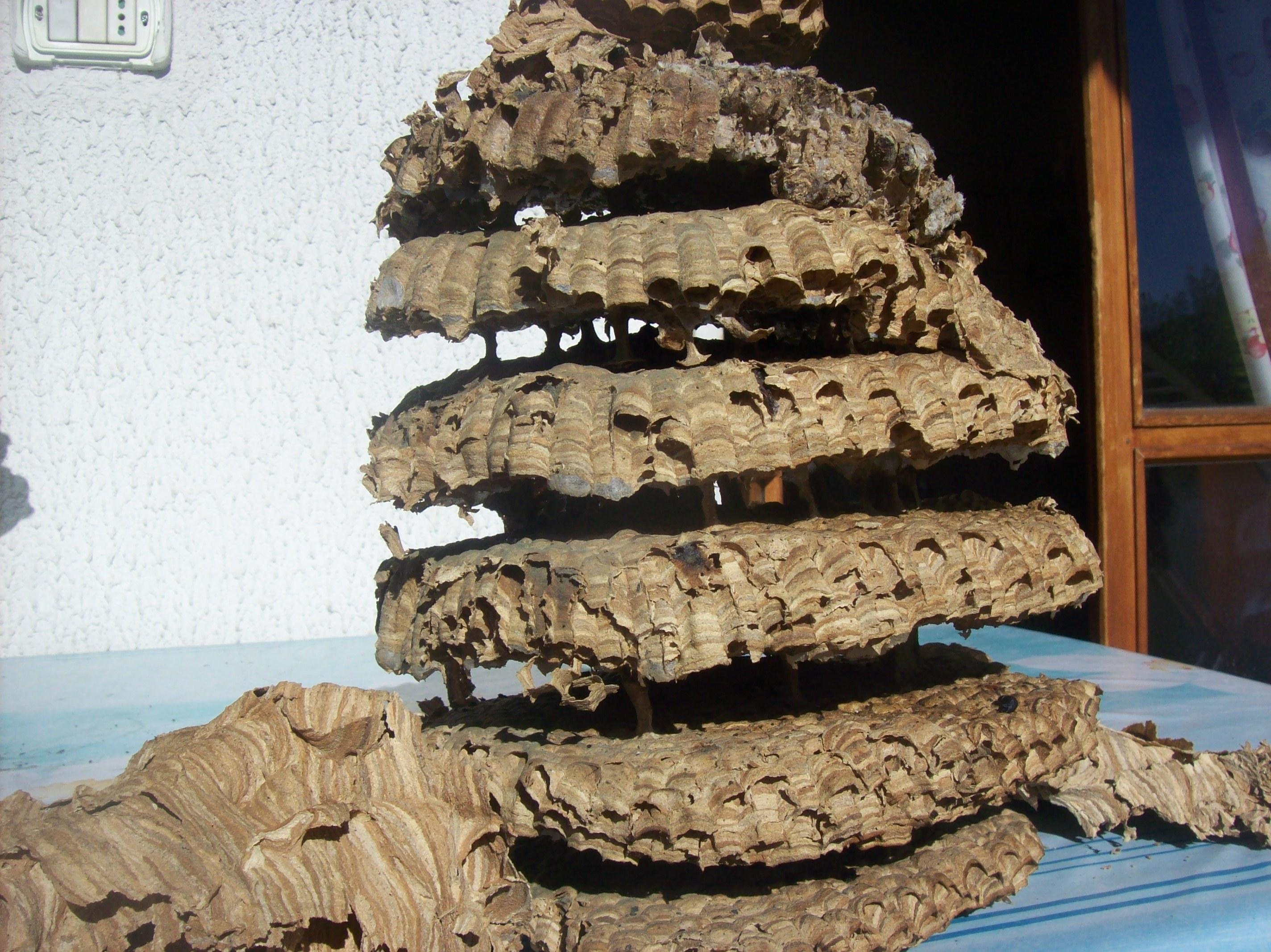Trova un gigantesco nido di calabroni nel camino di casa for Piani casa con camino nel centro della casa