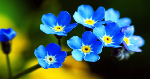 """""""I fiori blu"""""""