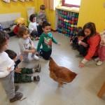 """Una gallina """"ospite"""" dell'asilo"""