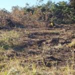 """Il terreno dopo gli interventi di """"ripulitura"""""""