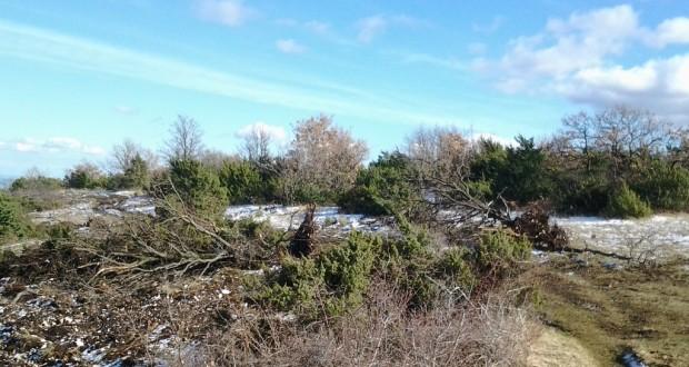 Alberi sradicati a Ugliano lo scorso inverno