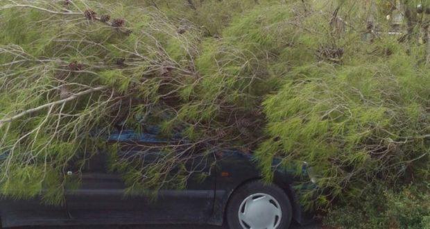 L'albero abbattutosi sopra un'auto in sosta