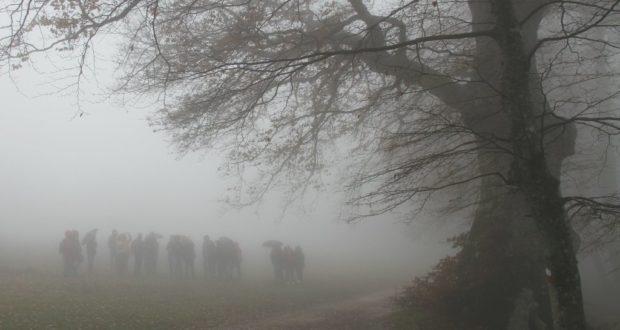 Una guida spiega al proprio gruppo di visitatori che quello di fronte è il faggio secolare più vecchio di Canfaito