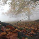 Tappeti di foglie
