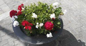 Una delle fioriere di piazza