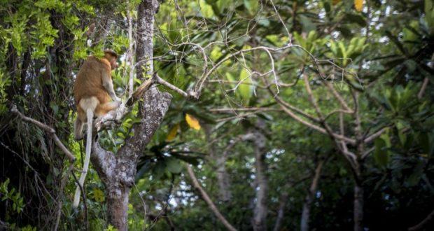 Nel Kalimantan