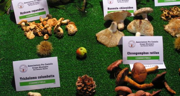 Funghi in mostra (foto d'archivio)