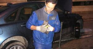 Luciano Acerbi mette il gattino in salvo