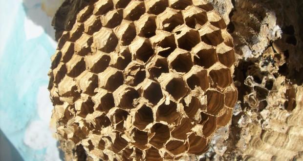 Il nido di calabroni rinvenuto nel camino