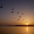 Rondini in volo: un'immagine spesso evocata dai versi di Pucciarelli