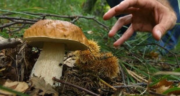 """Corso per prendere la """"patente"""" di raccoglitore di funghi"""