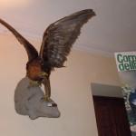L'esemplare di aquila presente alla mostra nel chiostro di San Domenico