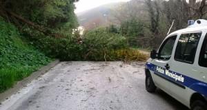 L'albero caduto in via del Vallato