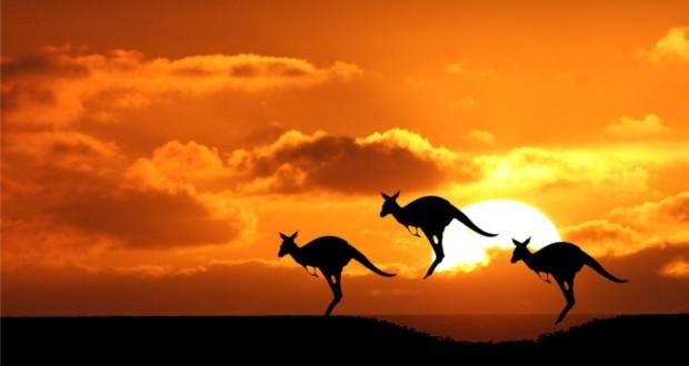 Canguri in Australia