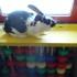 Il coniglietto Nero