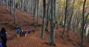 Escursione dell'8 novembre all'Abbadia di San Romualdo