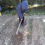 Un alunno impegnato nell'orto