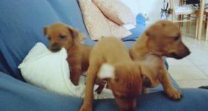 I cuccioli salvati dall'abbandono