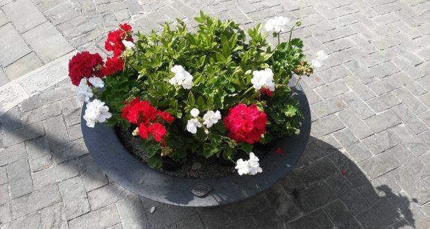 Una delle fioriere con i colori bianco e rosso della città di San Severino