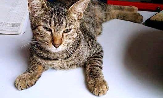 Vasco, il gattino tigrato della storia