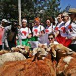 La consegna delle pecore