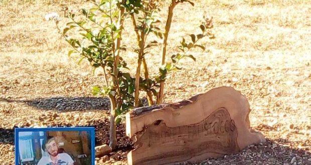 L'albero messo a dimora, con la foto e il nome di Andrea Falistocco