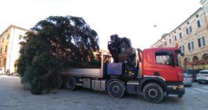L'albero di Natale giunto in piazza