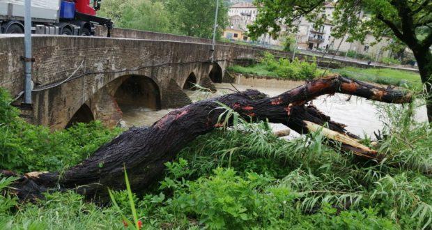 Ponte Sant'Antonio: il fiume liberato da tronchi