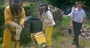 Polizia locale ed esperti intervengono per rimuovere lo sciame di api