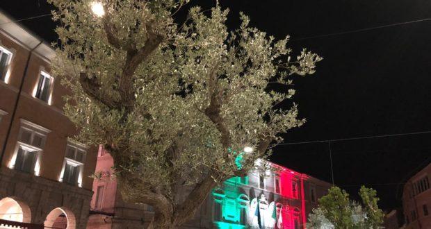 Un ulivo collocato in piazza e, alle spalle, il tricolore sulla facciata del Municipio