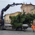 L'arrivo dell'albero in piazza