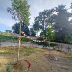 Gli alberi messi a dimora