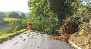 La strada interrotta a causa della quercia caduta